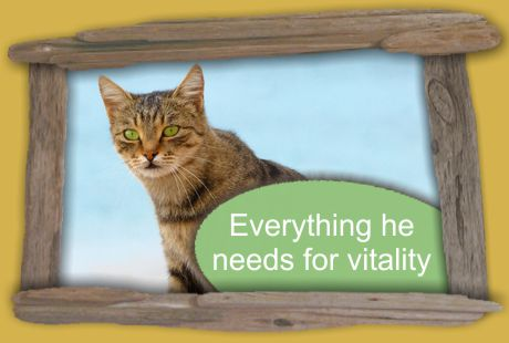 everything your pets need for vitality
