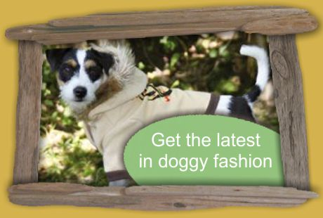 get the latest in doggy fashion