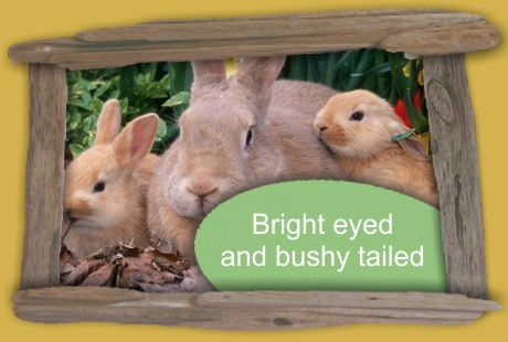 keep them bright eyed and bushy tailed