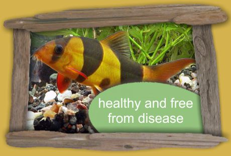 keep your pets healthy adn free from disease